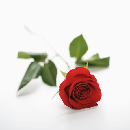 Single long-stemmed red rose against white background. photo