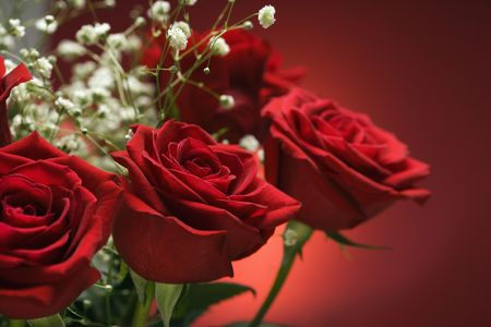 amore: Close-up of bouquet of red roses with babys breath against red background.