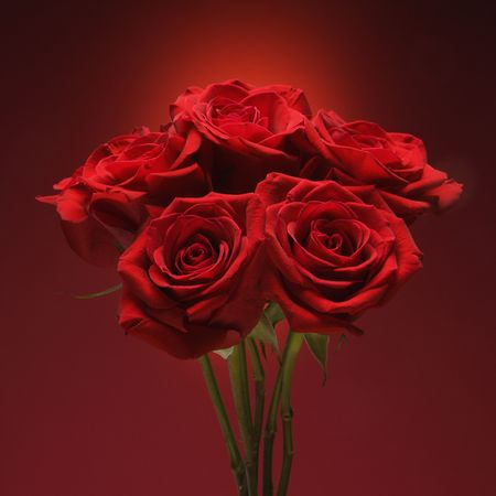 amore: Bouquet of red roses against red background.