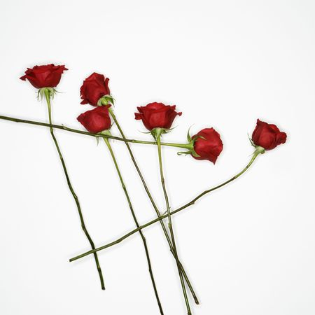 amore: Long-stemmed red roses spread out against white background. Stock Photo