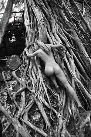 nude butt: Rear view of young adult Caucasian nude woman climbing up banyan tree roots in Maui.