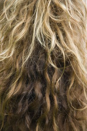 dirty blond: Close up of wavy dirty blond hair texture.