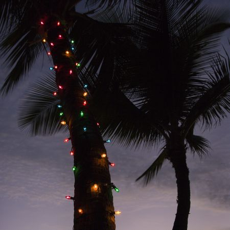 Festive colored lights wrapped around trunk of palm tree at beach. Stock Photo - 2205793