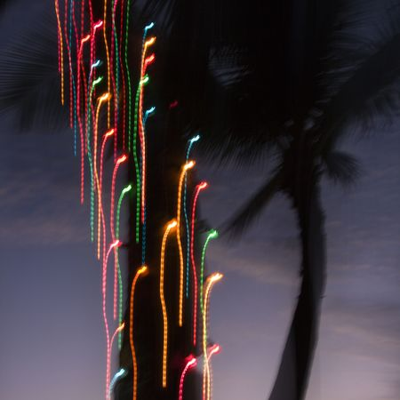 Colored lights on palm tree abstracted by camera movement. Stock Photo - 2205563