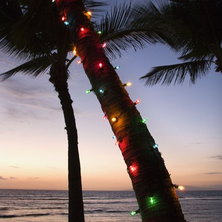 Festive colored lights wrapped around trunk of palm tree at beach at sunset. Stock Photo - 2205611