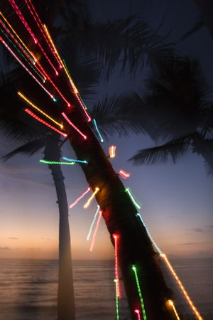 abstracted: Colored lights on palm tree abstracted by camera movement.