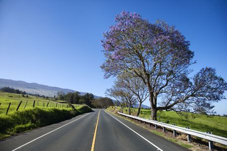Carretera con Jacaranda �rbol que florece con flores p�rpura en Maui, Hawai. Foto de archivo - 2214096