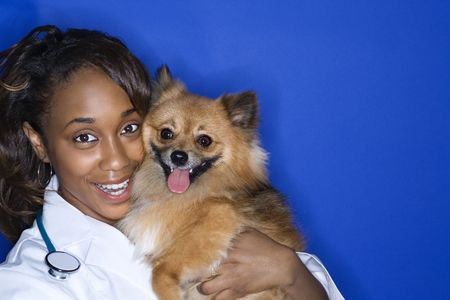 African American young adult female veterinarian holding brown Pomeranian dog.