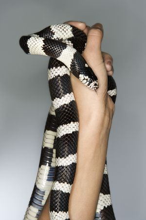 animal body part: California Kingsnake held in Caucasian mid-adult males hands.