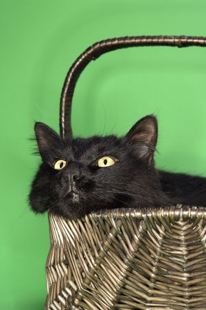 Black fluffy cat in basket. photo