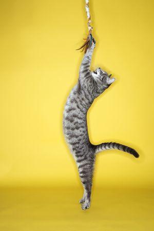 gato jugando: Gray rayas gato saltar atacar juguete.