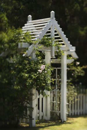 bald head island: Arbor with rose bush and white picket fence on Bald Head Island, North Carolina.