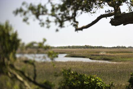 bald head island: Marsh landscape on Bald Head Island, North Carolina. Stock Photo