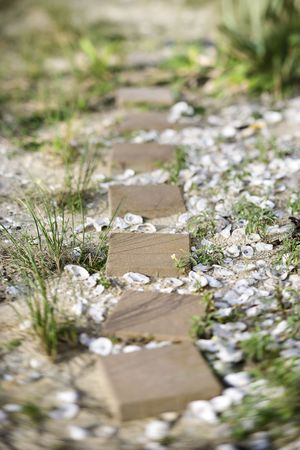 stepping: Stepping stone pathway with oyster shells.