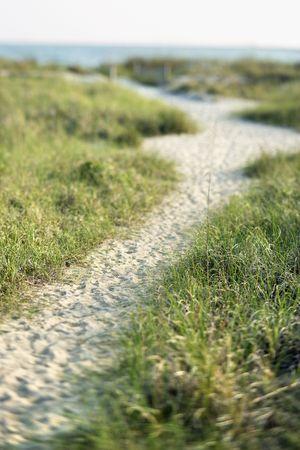 bald head island: Sandy pathway to beach on Bald Head Island, North Carolina.