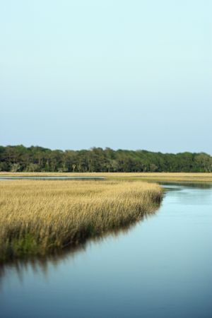 bald head island: Scenic marsh landscape on Bald Head Island, North Carolina. Stock Photo