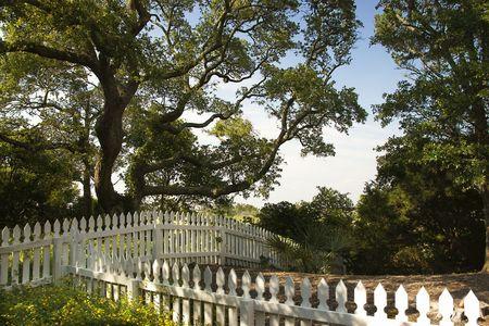 bald head island: White picket fence with live oak tree on Bald Head Island, North Carolina.