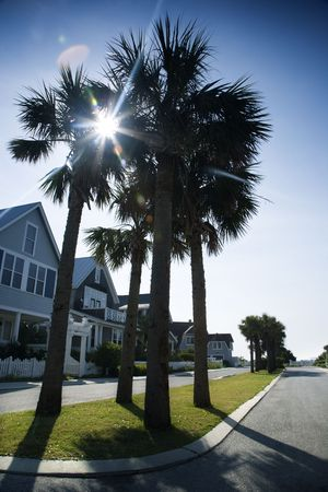bald head island: Houses on palm tree lined street on Bald Head Island, North Carolina. Stock Photo