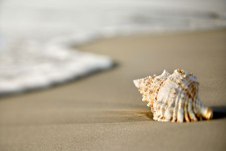 Conch shell on beach  with waves. photo