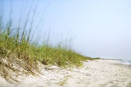 Sand dune with grass at the beach. photo