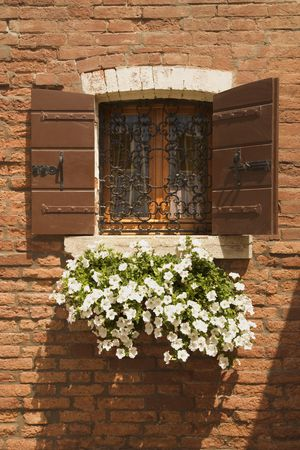 sill: Basket of white petunias hanging from window sill against brick wall.