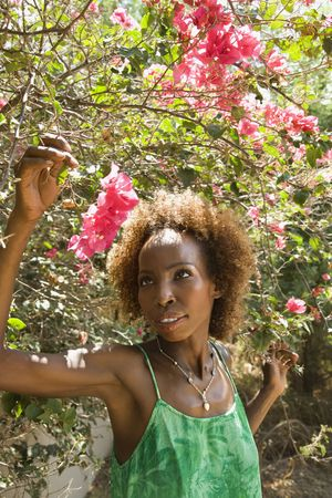 color bougainvillea: Mid-adult African American female looking at bougainvillea flower.