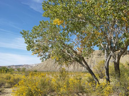 cottonwood canyon: Desert landscape of tree and rocky cliffs in Cottonwood Canyon, Utah.