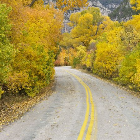 Country road with yellow Aspen trees on both sides. Stock Photo