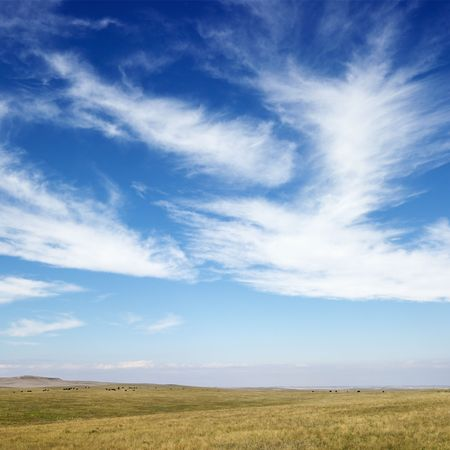 Sky scene of golden field and wispy cirrus clouds.  Stock Photo