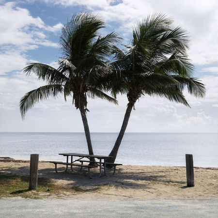 Picnic table by pair of palm trees on beach in Florida Keys, Florida, USA. photo