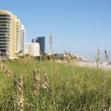 sunshine state: Beach grass and beachfront buildings in Miami, Florida, USA. Stock Photo