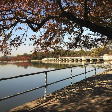 district of columbia: Tree by tidal basin in Washington, DC, USA.