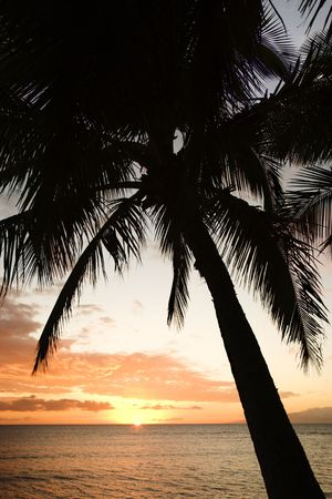 Sunset sky framed by palm tree over the Pacific Ocean in Kihei, Maui, Hawaii, USA. photo