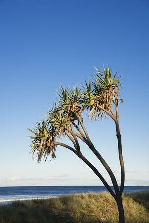 surfers paradise: Palm tree on beach on Surfers Paradise, Australia. Stock Photo