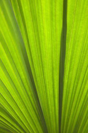daintree: Close up of plant leaf detail, Daintree Rainforest, Australia.