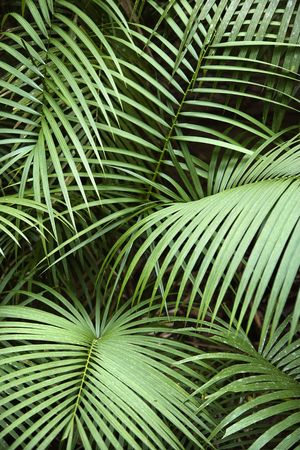 Tropical plant fronts in Daintree Rainforest, Australia. Stock Photo - 2655296
