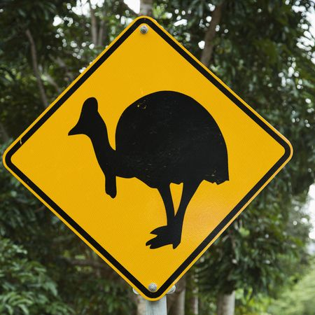 cassowary: Road sign for cassowary bird crossing in forest.