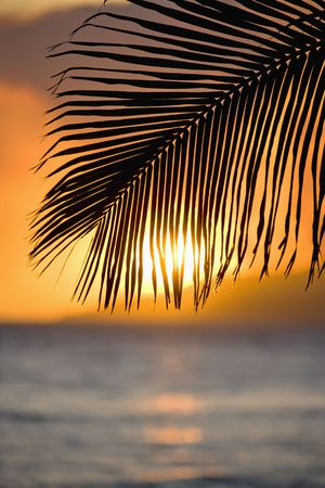 palm frond: Tramonto oltre oceano con frond palma silhouette a Maui, Hawaii.