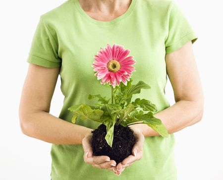 Portrait of woman standing holding pink gerber daisy plant. Stock Photo - 3557448
