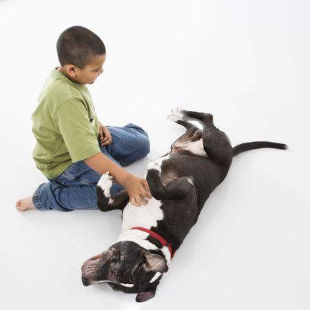 petting: Young hispanic boy petting black and white dog on floor.