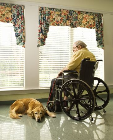 wheelchair man: Therapy dog lying next to an elderly man in a wheelchair who looks out a window. Vertical shot. Stock Photo
