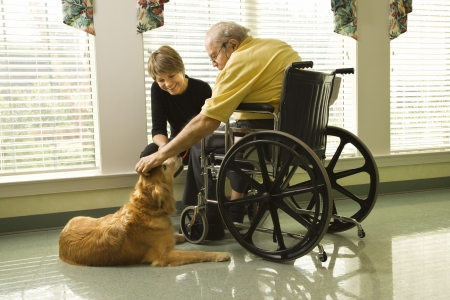 senior living: Therapy dog is pet by an elderly man in a wheelchair and a younger woman. Horizontal shot.
