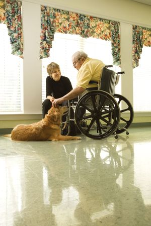 dog wheelchair: Therapy dog is pet by an elderly man in a wheelchair and a younger woman. Vertical shot