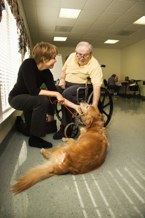 pet therapy: Therapy dog is pet by an elderly man in a wheelchair and a younger woman. Vertical shot