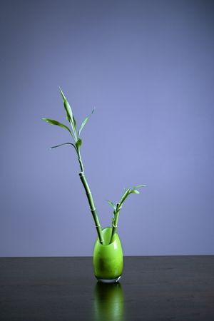 Bamboo in a opaque green glass vase sitting on a table or desk. Vertical shot. photo