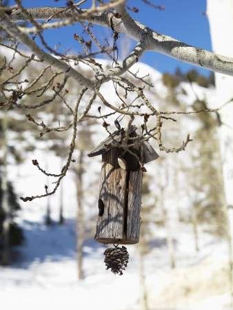 Rustic wooden birdhouse hanging from a tree branch with a snowy landscape in background. Vertical shot. photo