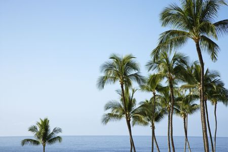 Palm trees with the ocean horizon in the distance. The sky is clear and blue. Horizontal shot. photo