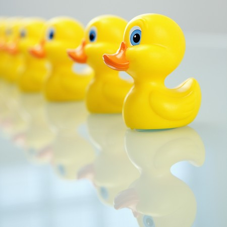 Concept of organization with ducks in a row. Standard-Bild