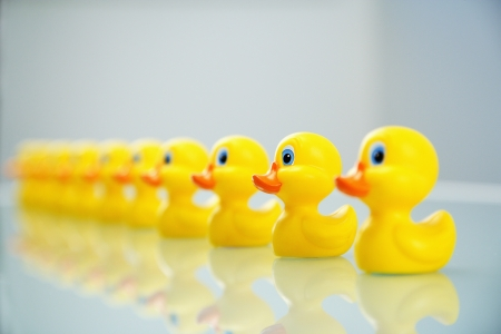 Yellow rubber ducks all lined up in a row. photo
