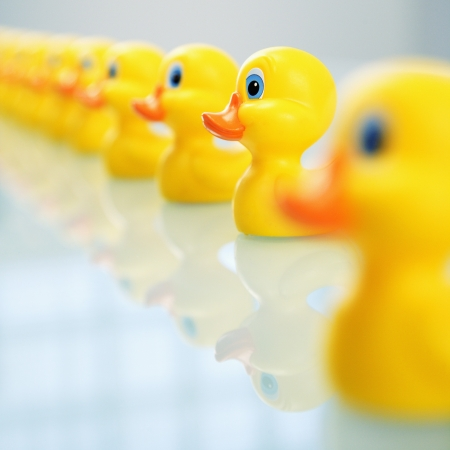 Concept of idiom phrase ducks in a row. Stock Photo
